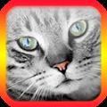 猫翻译模拟器下载icon图